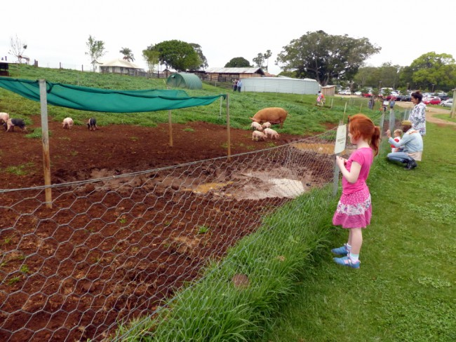 what to do in byron bay with kids at the farm