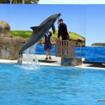 Top 12 Things to do in Coffs Harbour