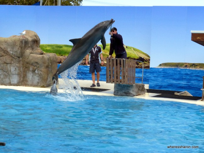 coffs harbour things to do at Dolphin Marine Magic