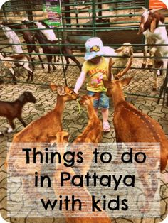 pattaya for family