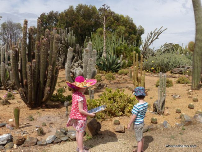 S and Z look hard to try and spot another exotic cactus.