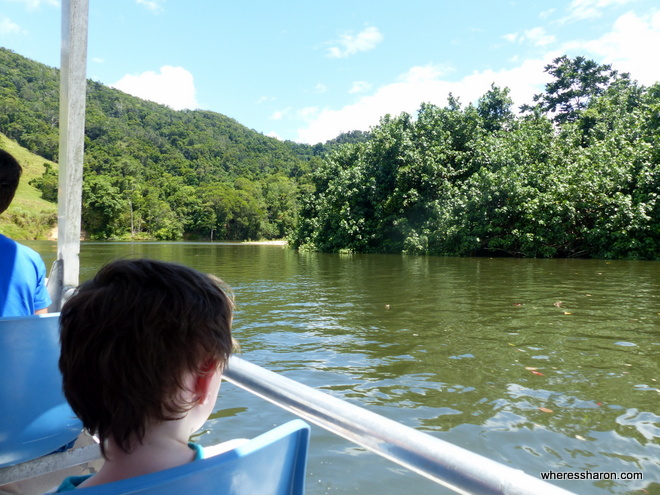 The Daintree River Crocodile cruise what to see in port douglas