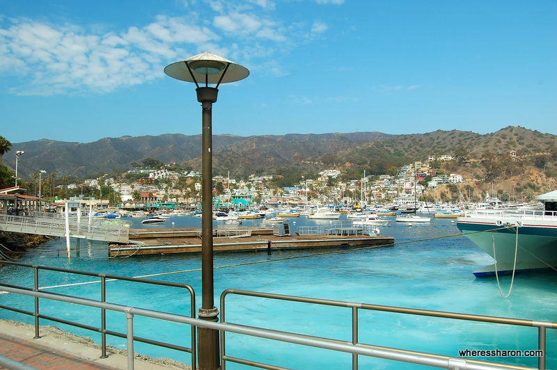what to see in catalina island