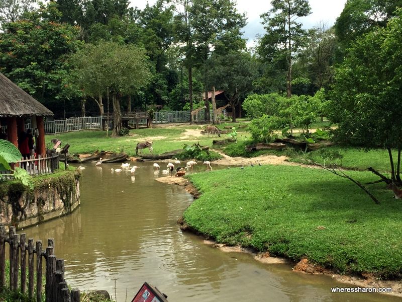 The great African enclosure at Taiping Zoo.