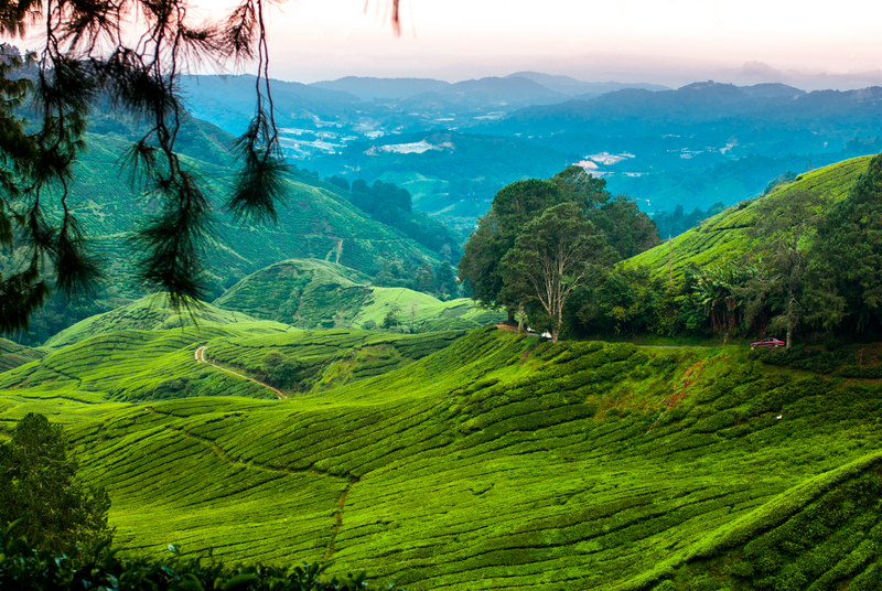 Top Things to do in Cameron Highlands