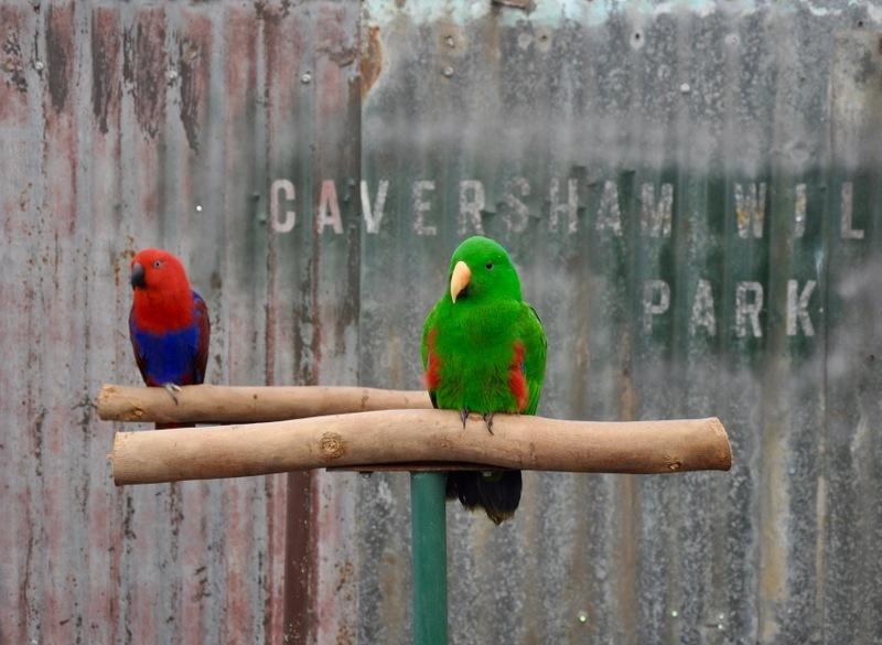 Caversham Wildlife Park perth things to do family