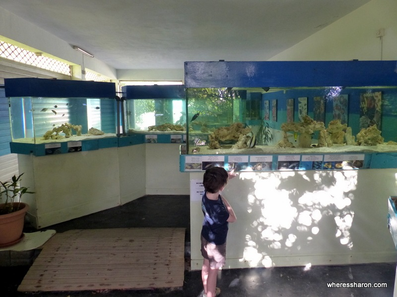 Mauritius Aquarium romantic things to do in mauritius