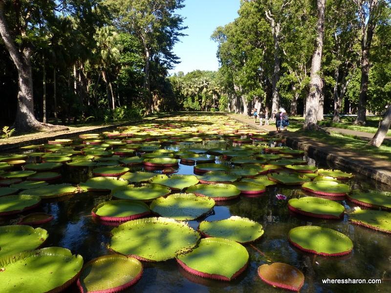 Sir Seewoosagur Ramgoolam Botanical Garden best places to visit mauritius