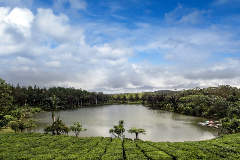 top 10 places to visit in mauritius tea plantation Bois Cheri
