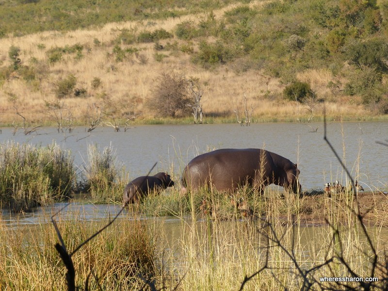Pilanesberg National Park